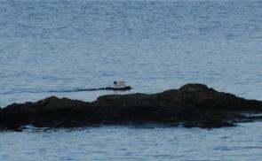 Durch die Schären vor Gotland